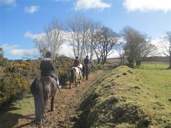 horse riding northern ireland